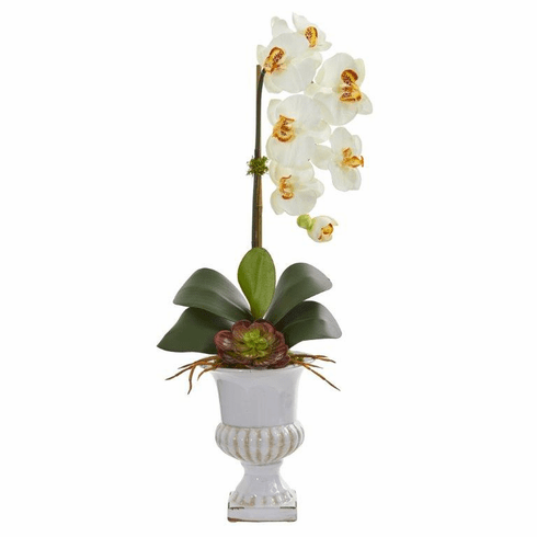"25"" Phalaenopsis Orchid and Succulent Artificial Arrangement in Urn - Cream"