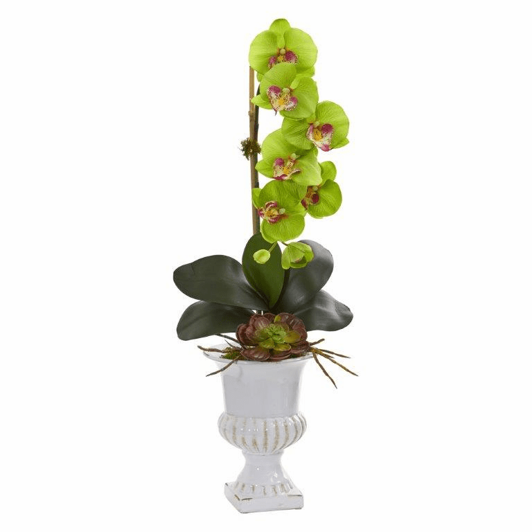 "25"" Phalaenopsis Orchid and Succulent Artificial Arrangement in Urn - Green"