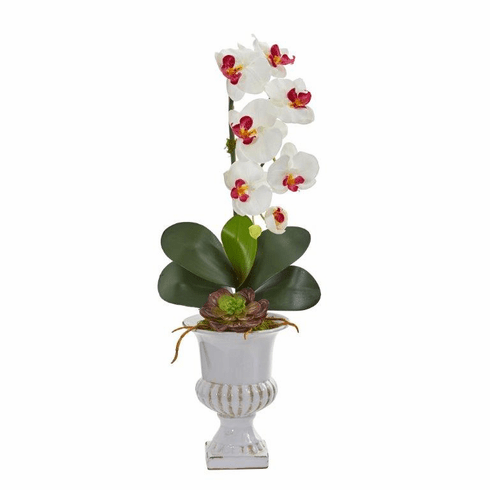"25"" Phalaenopsis Orchid and Succulent Artificial Arrangement in Urn - White"