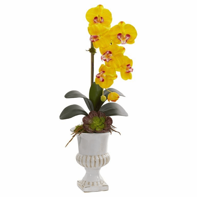 "25"" Phalaenopsis Orchid and Succulent Artificial Arrangement in Urn - Yellow"