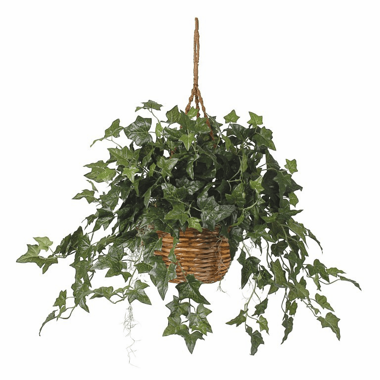 "26"" English Ivy Hanging Basket Silk Plant"