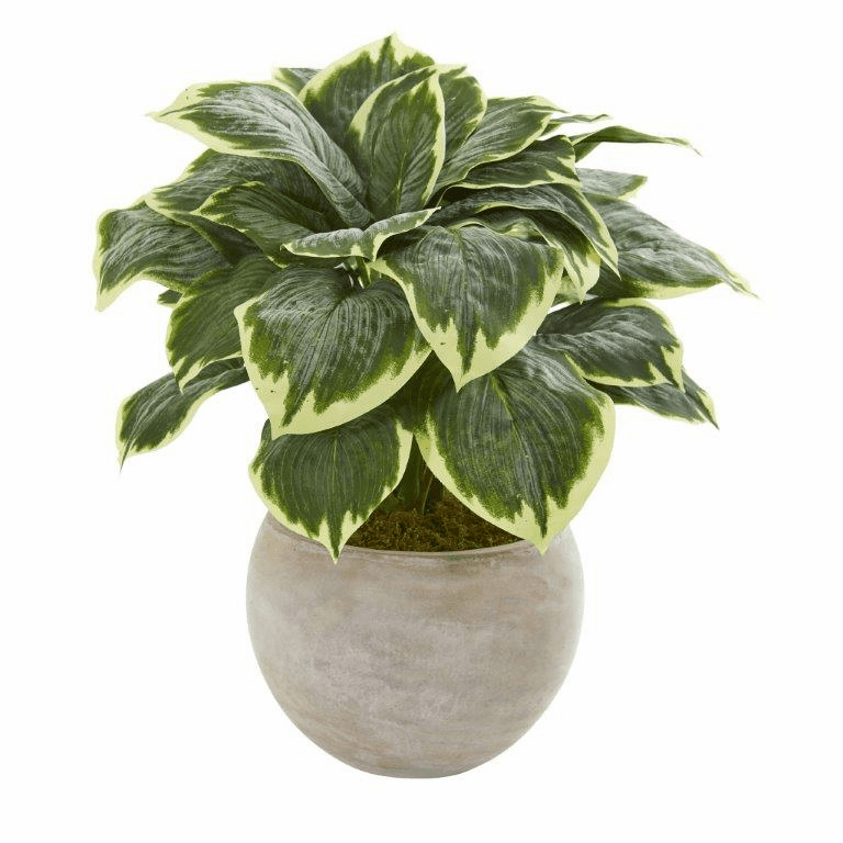26� Variegated Hosta Artificial Plant in Sand Colored Bowl