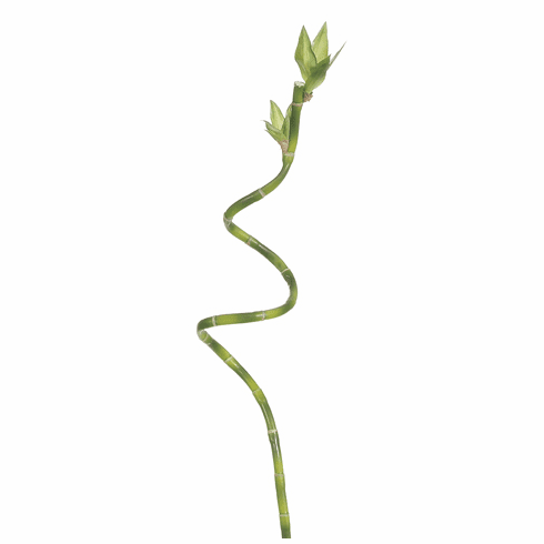"""27"""" Artificial Curly Lucky Bamboo Stalk Spray - Set of 12"""