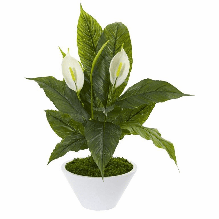 27� Spathifyllum Artificial Plant in White Vase