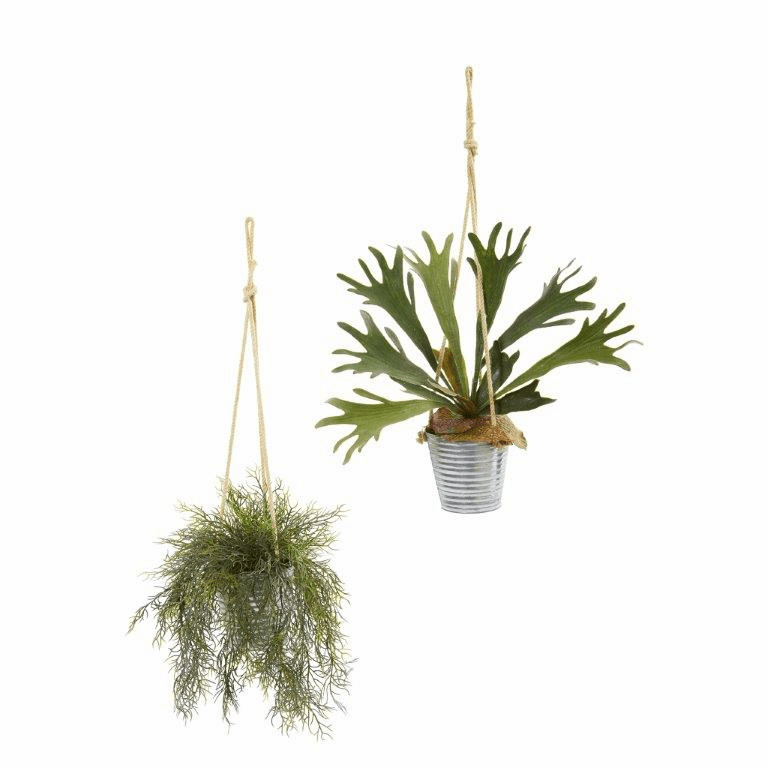 27� Tillandsia Moss and Staghorn Artificial Plant in Hanging Bucket (Set of 2)