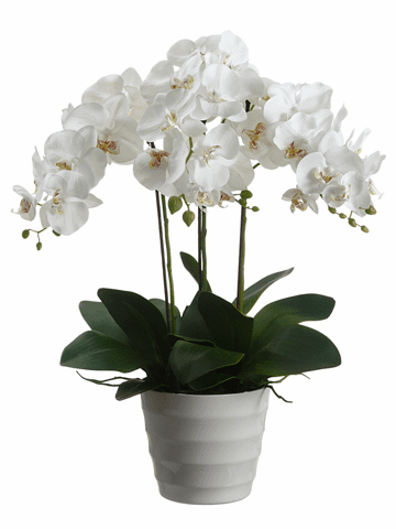 "28"" Artificial Phalaenopsis Orchid Plant Arrangement in Plastic Pot - Set of 2"