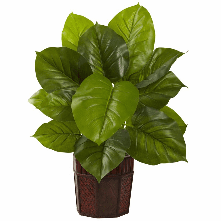 """28"""" Large Leaf Philodendron with Decorative Planter (Real Touch)"""