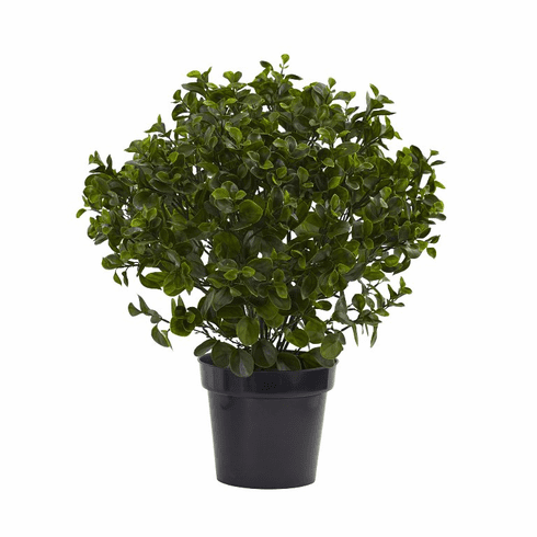 "28"" Peperomia Plant UV Resistant (Indoor/Outdoor)"