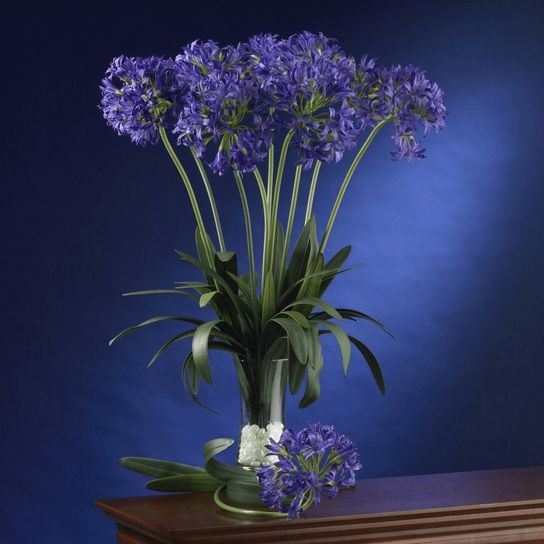 "29"" African Lily Stem (Set of 12)"