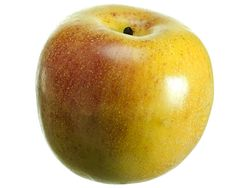 """3.25"""" Artificial Weighted Gala Apple - Set of 12"""
