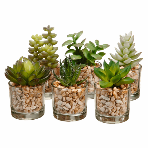"3-4"" Artificiaql Succulent Cactus in Glass Vase Assortment (6 ea/set) Two Tone Green - 4 Sets"