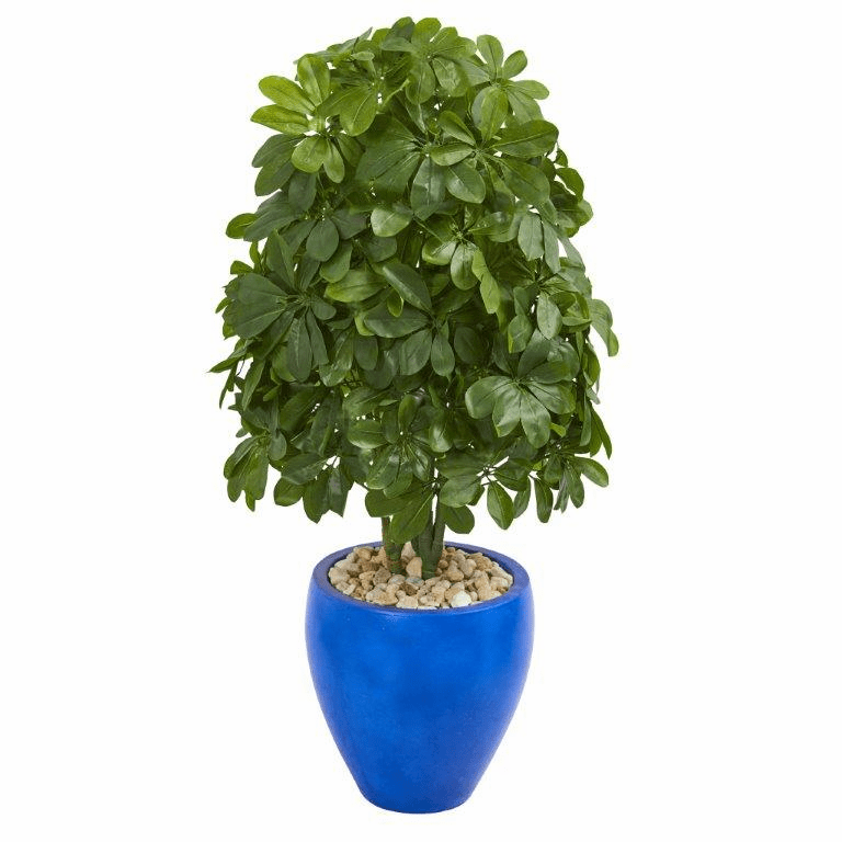 3.5� Schefflera Artificial Plant in Blue Oval Ceramic (Real Touch)