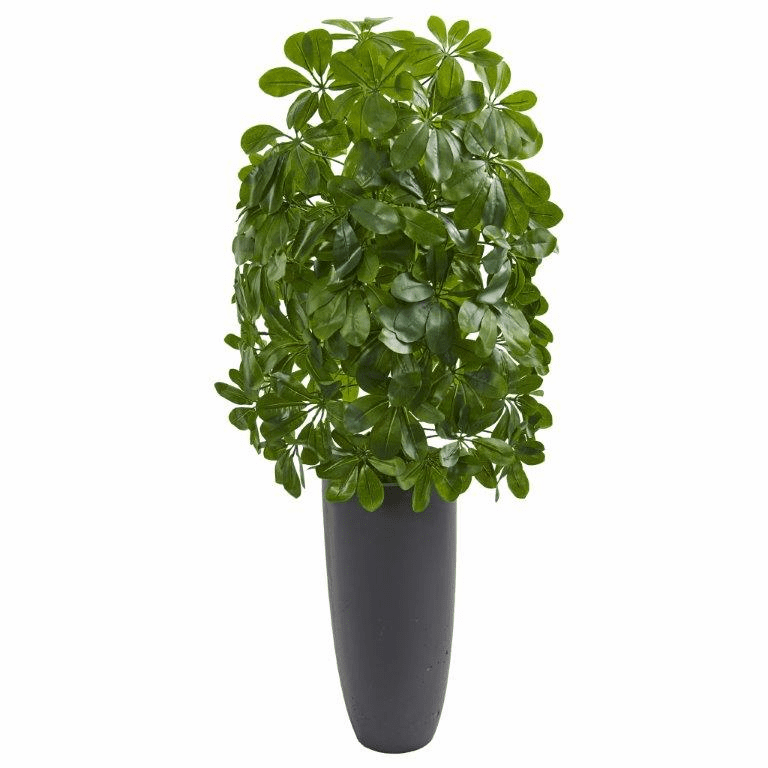 3.5' Schefflera Artificial Plant in Gray Planter (Real Touch)