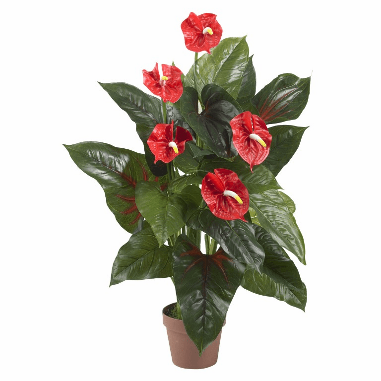 3� Anthurium Silk Plant (Real Touch)