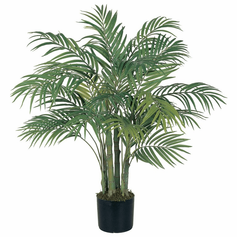 3' Areca Silk Palm Tree