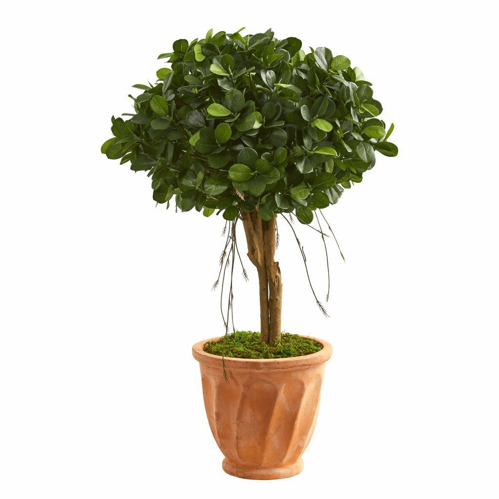 3� Ficus Artificial Tree in Terra Cotta Planter