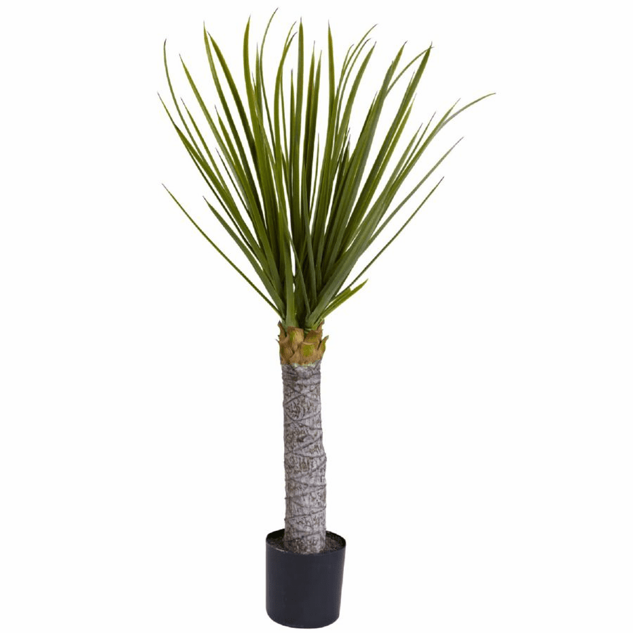 3� Yucca Tree with 699 Leaves