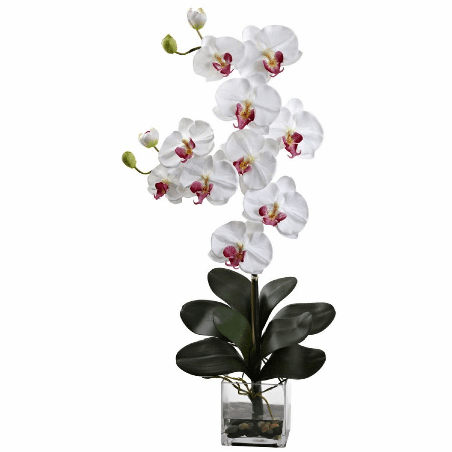 "30.75"" Double Giant Phalaenopsis in Vase - White"