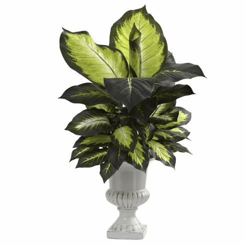 "30"" Dieffenbachia with White Ceramic Urn"