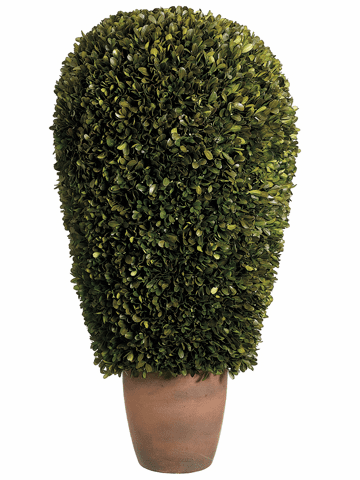 "30"" H  X 14"" D Preserved Boxwood Ball Topiary in Pot"