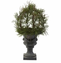 30� Pond Cypress Topiary with Urn (Indoor/OutDoor)