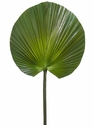 "31"" Artificial Fan Palm Spray - Set of 6"