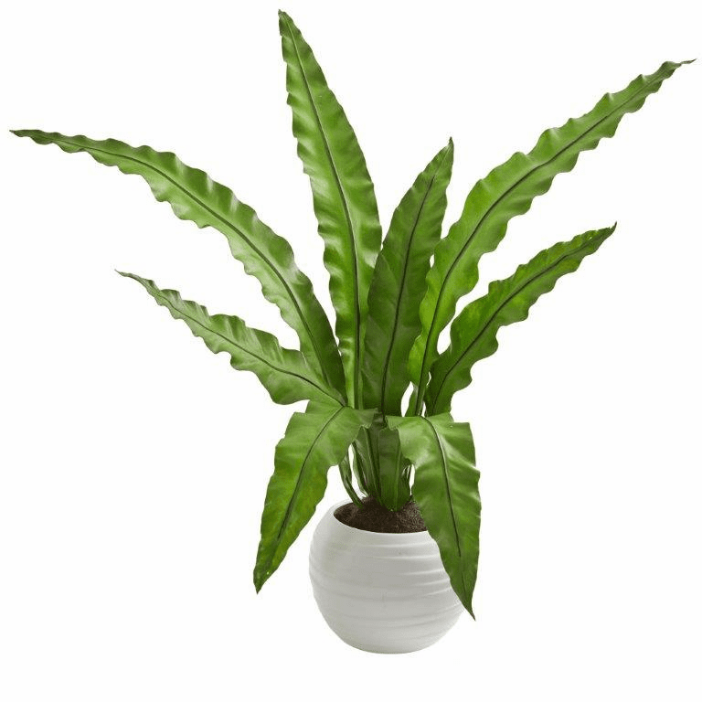 31� Birds nest Artificial Plant in White Planter