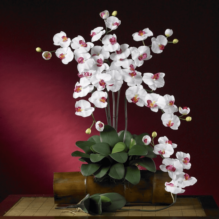 "31"" Phalaenopsis Silk Orchid Flower Stems w/Leaves (Set of 6 Stems - Non Potted) - White"