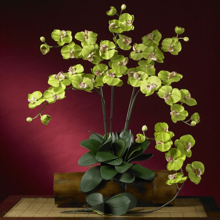 "31"" Phalaenopsis Silk Orchid Flower w/Leaves (Set of 6 Stems - Non Potted) - Green"