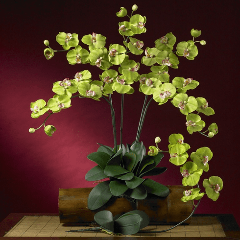"""31"""" Phalaenopsis Silk Orchid Flower w/Leaves (Set of 6 Stems - Non Potted) - Green"""