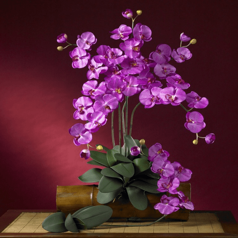"""31"""" Phalaenopsis Stem (Set of 12 Stems - non Potted) - Orchid"""