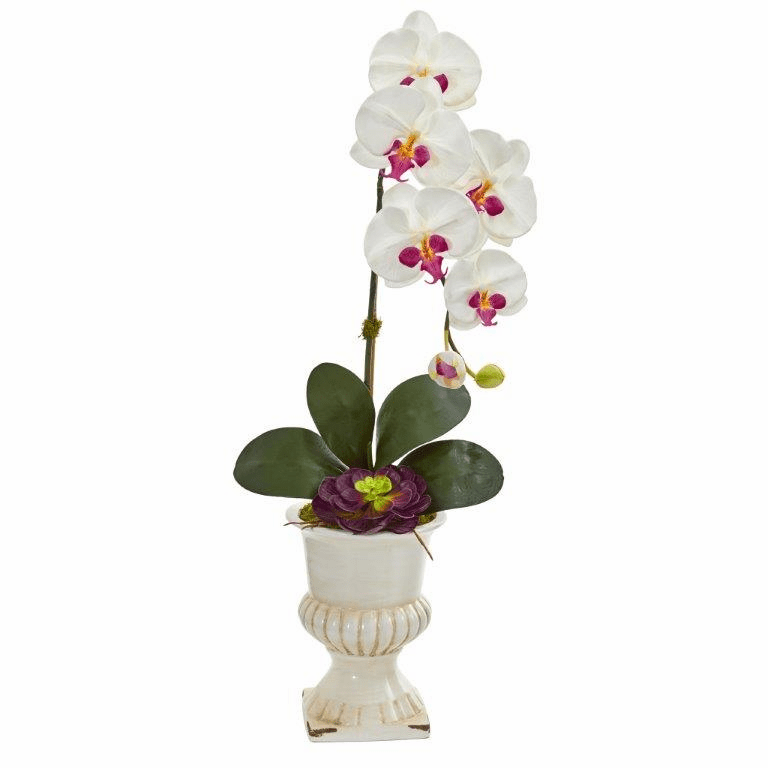 "33"" Orchid and Succulent Artificial Arrangement in Urn - White"