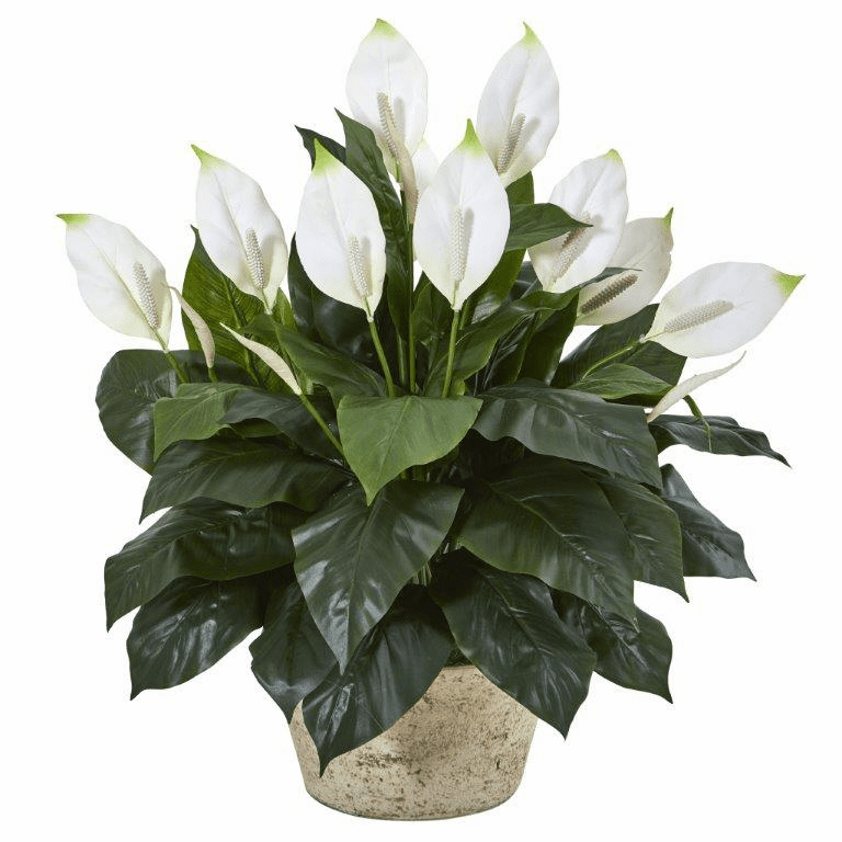 35� Spathifyllum Artificial Plant in White Planter