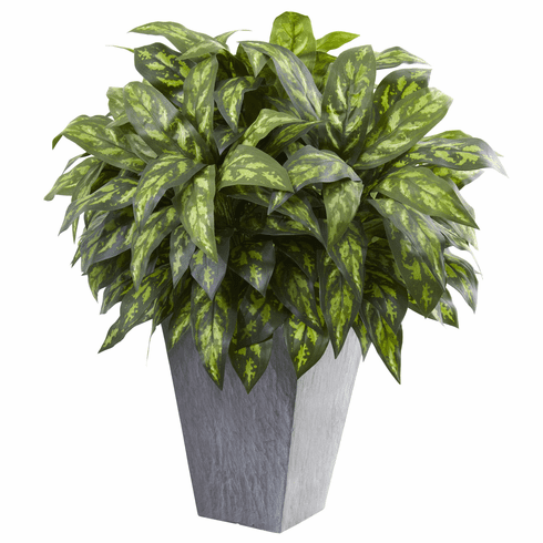 "37"" Large Silver King Plant in Slate Planter"