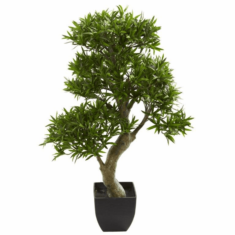 37� Podocarpus Artificial Tree