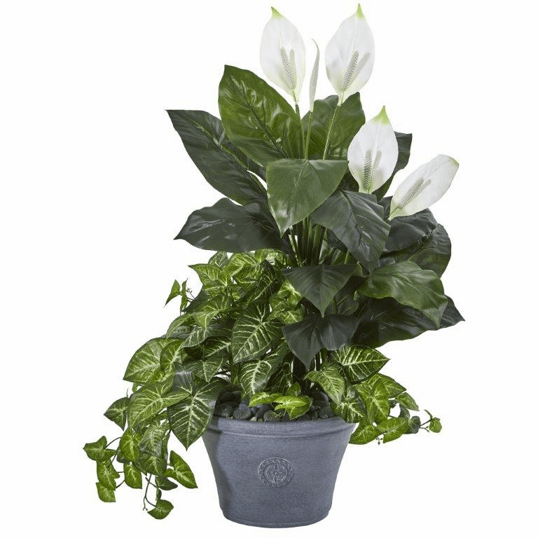 39� Spathifyllum and Nepthytis Artificial Plant in Gray Planter