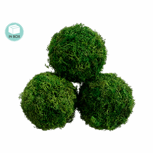 """4.3"""" Diameter Preserved Small Sphagnum Moss Ball - (6 boxes each contains 3 moss balls)"""