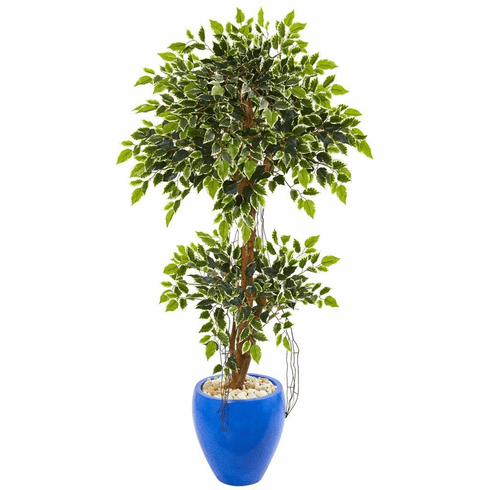 4.5' Variegated Ficus Artificial Tree in Blue Planter