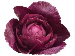 """4"""" Artificial Cabbage Head - Set of 12 (shown in Purple)"""