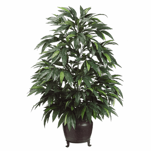 4' Mango Silk Tree in Metal Container