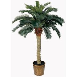 4' Sago Silk Palm Tree