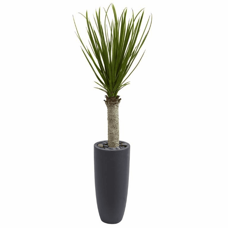 4� Yucca Tree Floor Plant in Gray Cylinder Planter