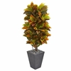 5.5� Croton Artificial Plant in Slate Planter (Real Touch)