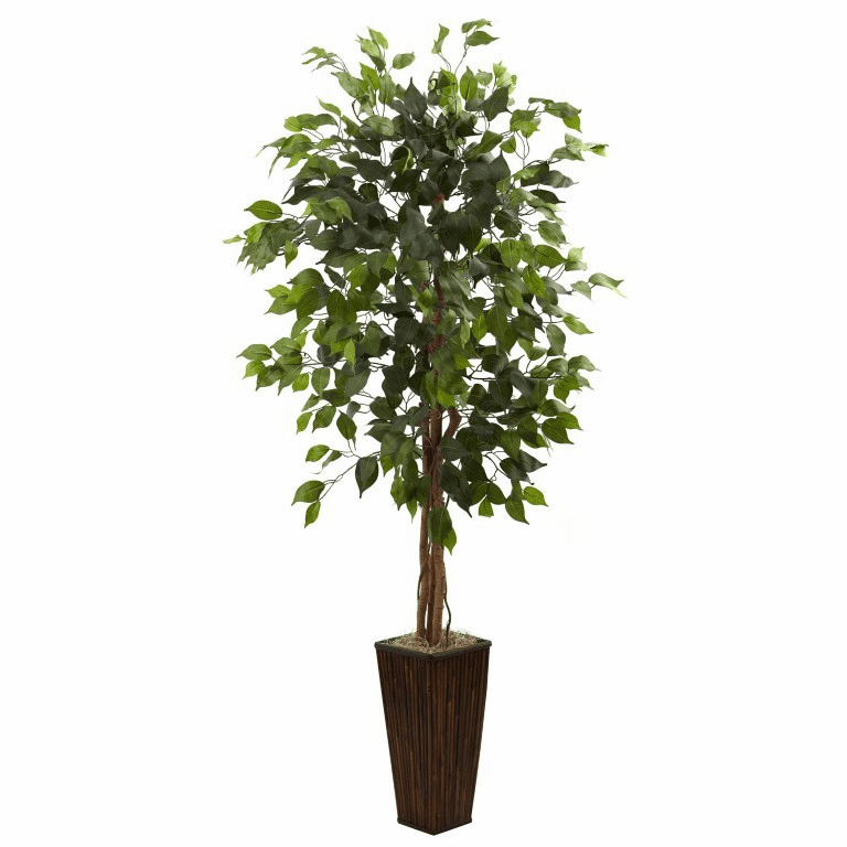 5.5� Ficus Tree in Bamboo Planter