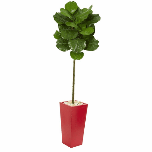5.5' Fiddle Leaf Artificial Tree in Red Tower Planter