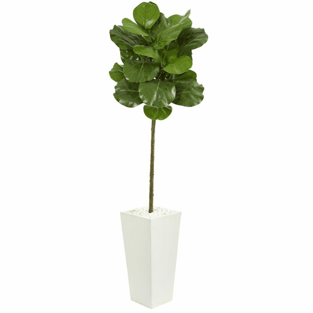 5.5� Fiddle Leaf Artificial Tree in White Tower Planter