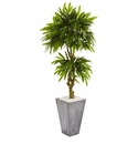 5.5� Mango Artificial Tree in Concrete Planter UV Resistant (Indoor/Outdoor)