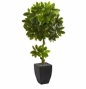 5.5� Schefflera Artificial Tree in Black Wash Planter UV Resistant (Indoor/Outdoor)