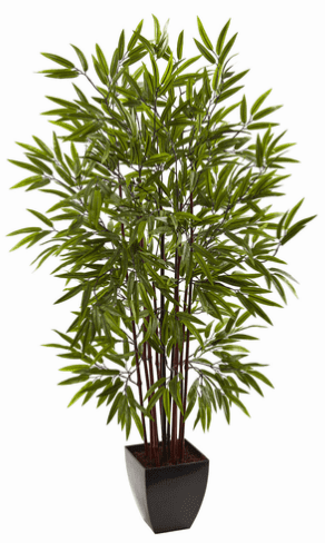 5� Bamboo Silk Tree w/Planter