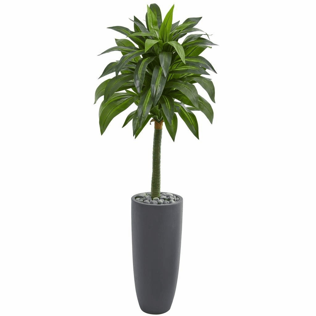 5� Dracaena Artificial Plant in Gray Planter